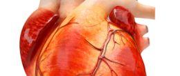 FAQ Herzinfarkt