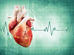 Das Herz: Aufbau, Funktion, Versorgung