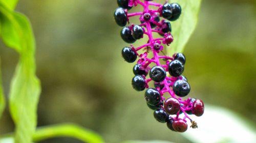 Homöopathie: Wichtige Mittel und ihre Wirkung