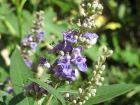 Pflanzliche Wirkstoffe gegen Wechseljahrsbeschwerden